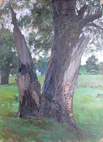 Old White Willow vegetation - oil painting